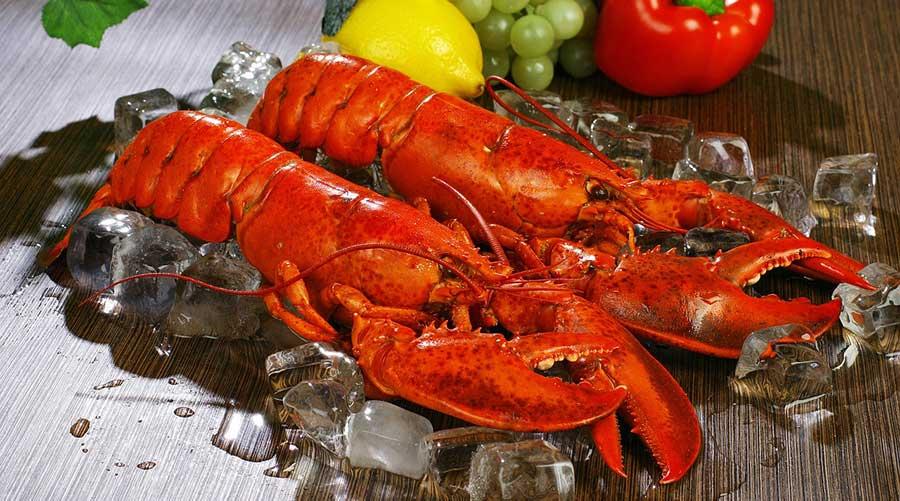 sous vide lobster vacuvita